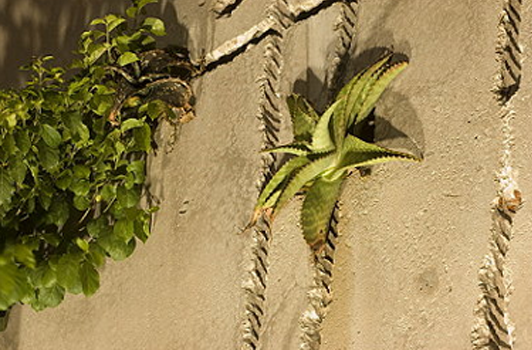 Plants growing on the side of the sculpture