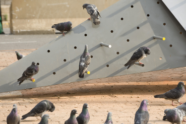 pigeon_sq_detail1